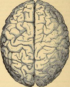 ABI TBI brain hemispheres